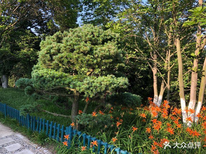 青岛植物园图片 - 第74张