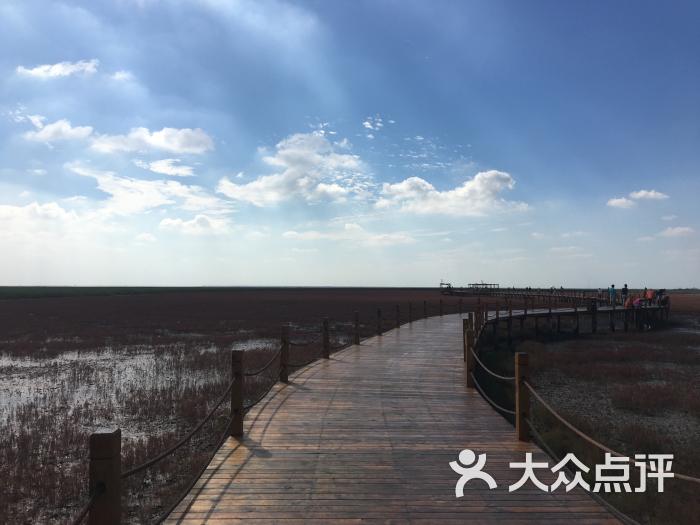 红海滩旅游风景区-图片-大洼县周边游-大众点评网