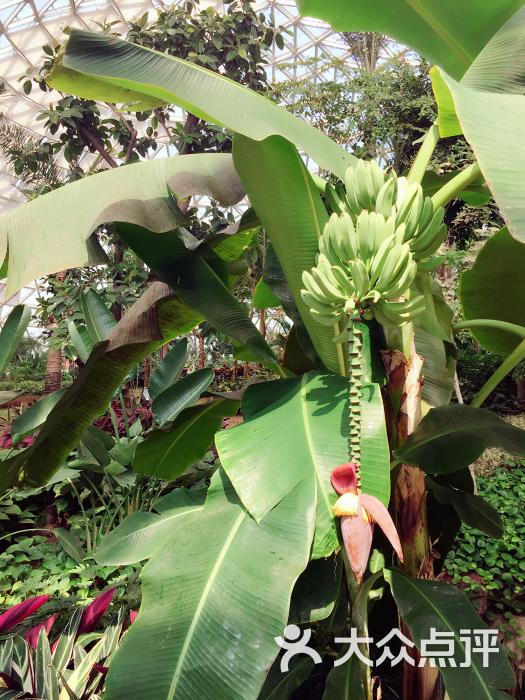 大阳山植物园-图片-苏州周边游-大众点评网