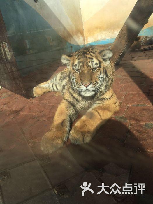 大连森林动物园-图片-大连景点-大众点评网