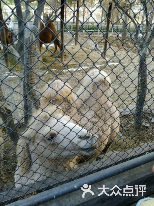 王城公园动物园图片 - 第9张