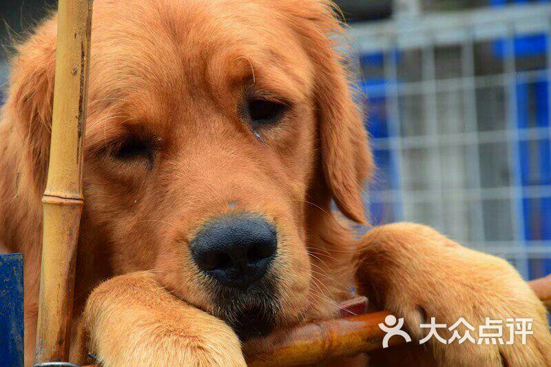 爱之家流浪动物救助中心图片 - 第20张