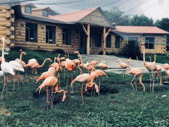 北方森林动物园售票处