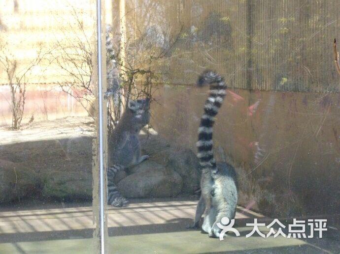 青岛动物园-图片-青岛周边游-大众点评网