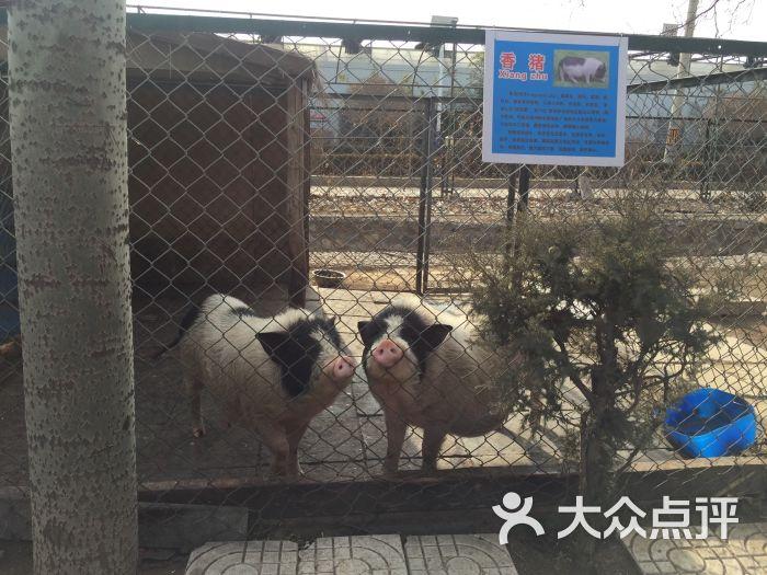 美神宫动物园图片 - 第3张