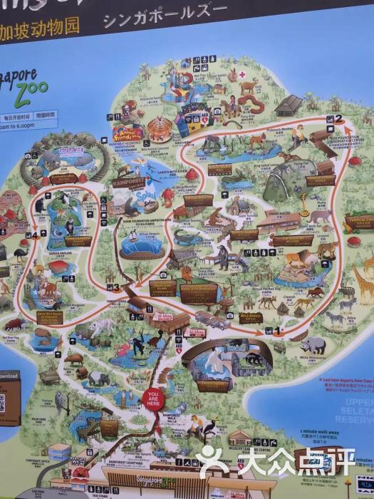 新加坡动物园图片 - 第2张