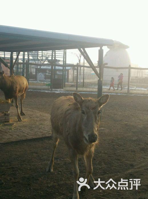 光合谷动物园羚羊图片 - 第4张