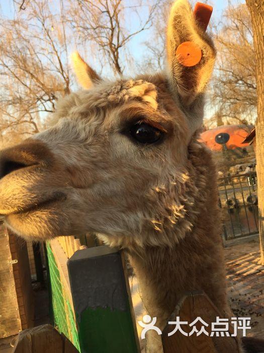 朝阳公园亲子动物园 图片 - 第47张