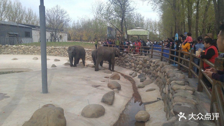 北京野生动物园-流星的尾巴