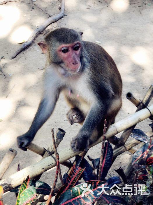 南湾猴岛景区图片 - 第5张