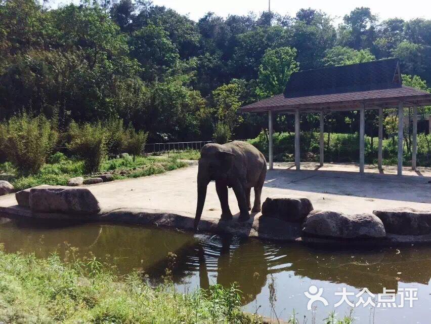 雅戈尔动物园图片 - 第481张