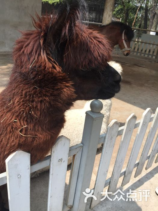 南通动物园图片 - 第26张