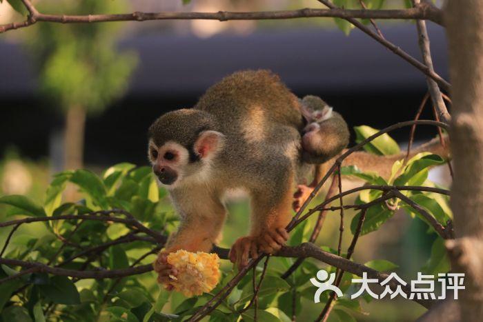 海口天鹅湖动物乐园松鼠猴图片 - 第8张