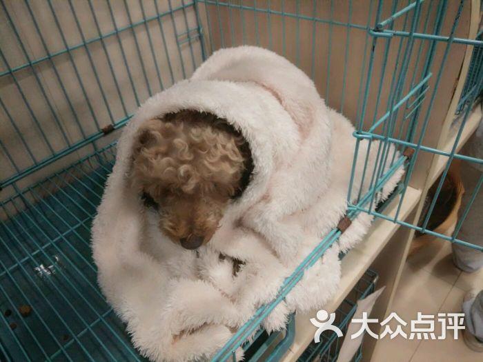 虹泰宠物医院(滨江彩虹分院)-图片-杭州宠物-大众