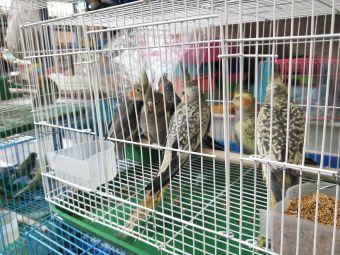阳明花鸟市场