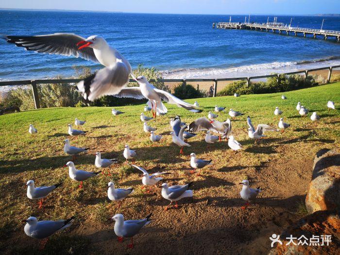 菲利普岛野生动物园-图片-维多利亚景点-大众点评网