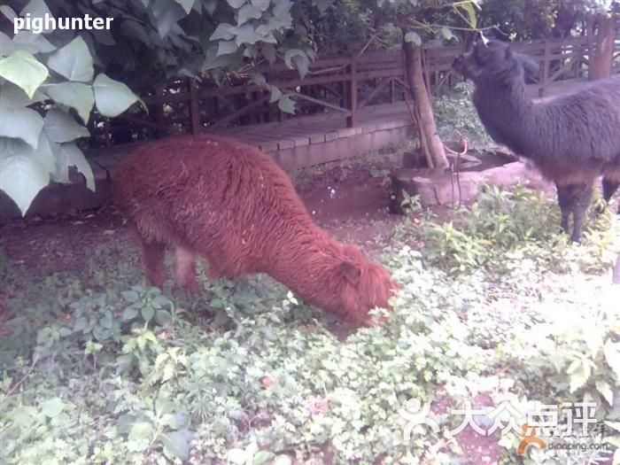 重庆动物园-草泥马2图片-重庆周边游-大众点评网