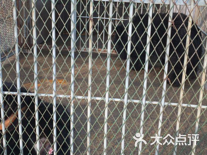 濮阳市中心动物园图片 - 第9张