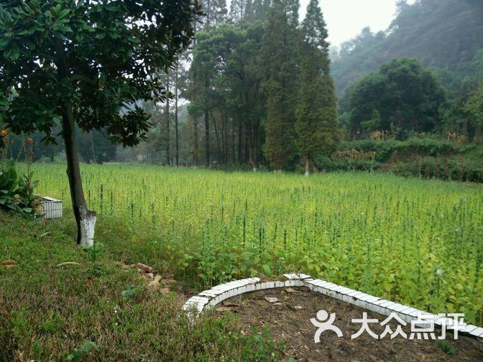 浙江省衢州高级中学-高中-衢州学习培训-大众点还一觉在醒来我图片图片