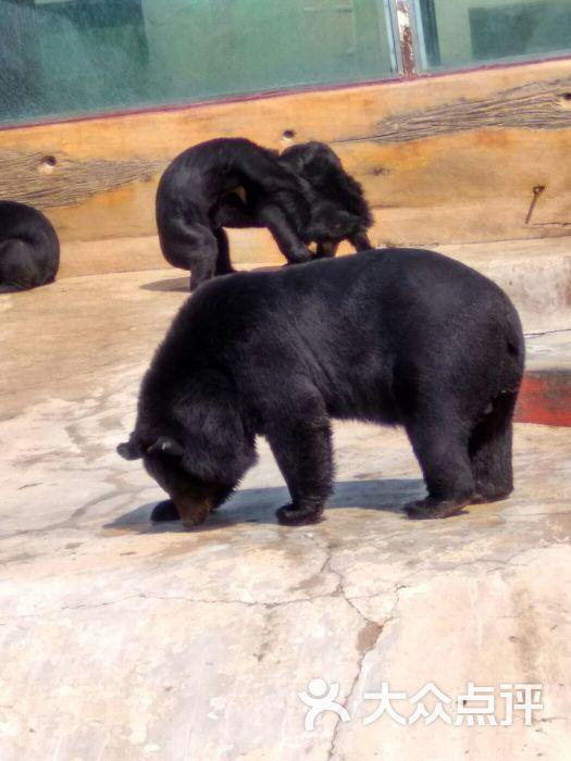 东方熊牧场(北宅小西湖农家宴采摘)-图片-青岛周边游