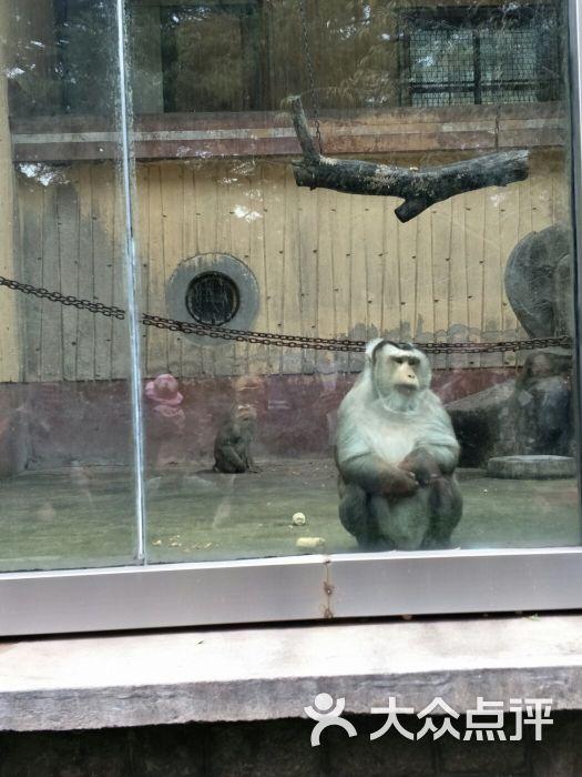 青岛动物园图片 - 第3张
