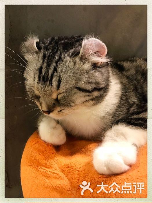 就是这样的喵cat coffee(猫咖啡厅 猫主题)图片 - 第8张