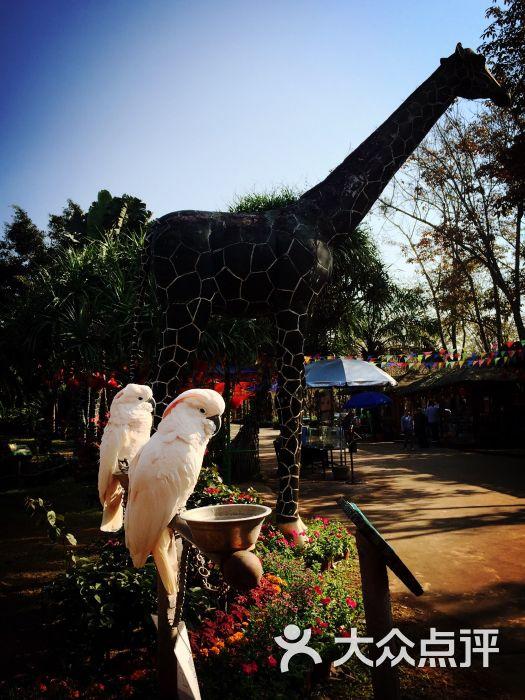 海南热带野生动植物园(动物园)-图片-海口景点