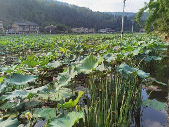 大田寨湿地人家农家乐