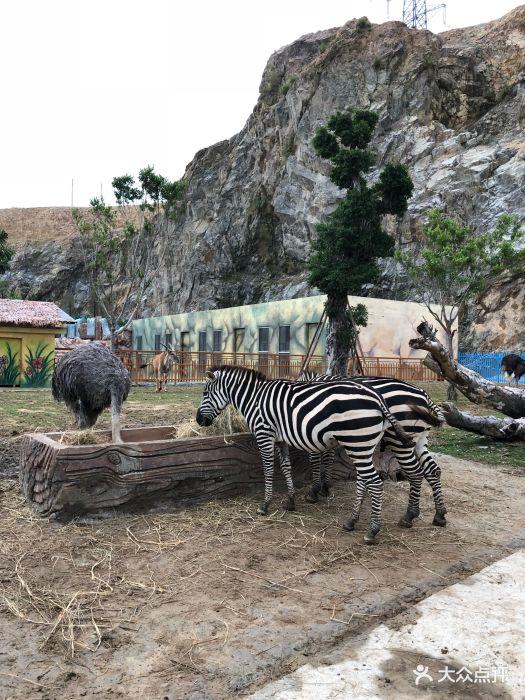永鸿野生动物世界图片 - 第42张
