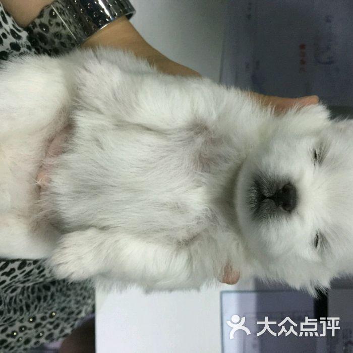 维多365棋牌娱乐城_365棋牌唯一官网活动_365棋牌电脑下载手机版下载医院图片-北京宠物医院-大众点评网