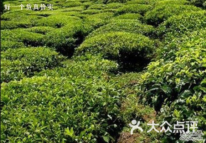 茶苗圃设计