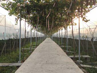 万紫千红生态果园