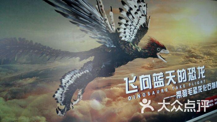中国古动物馆图片 - 第834张