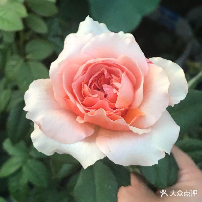 上井精致料理(巴黎春天店)图片 - 第163张