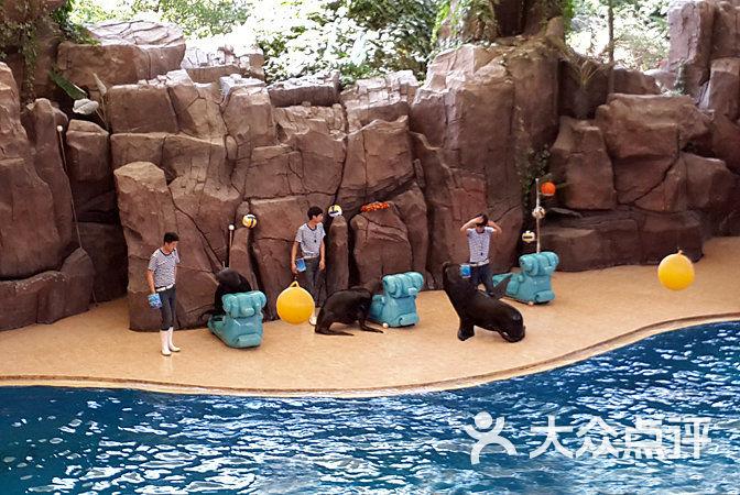 中华恐龙园 海狮表演图片 常州景点