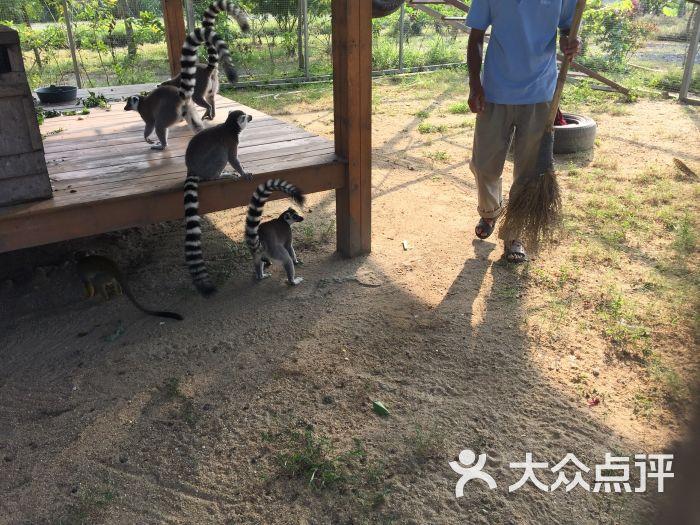 海口天鹅湖动物乐园图片 - 第18张