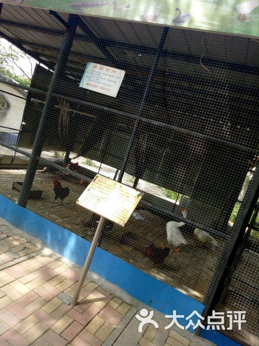 莲花山动物园图片 - 第2张