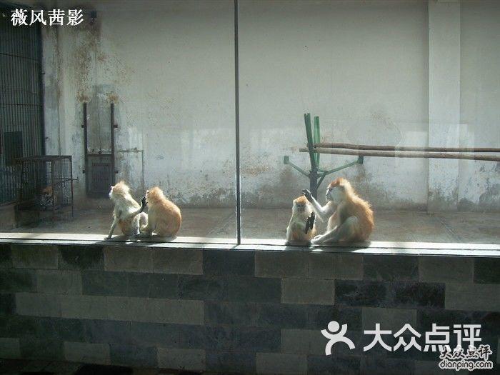 北京野生动物园的点评