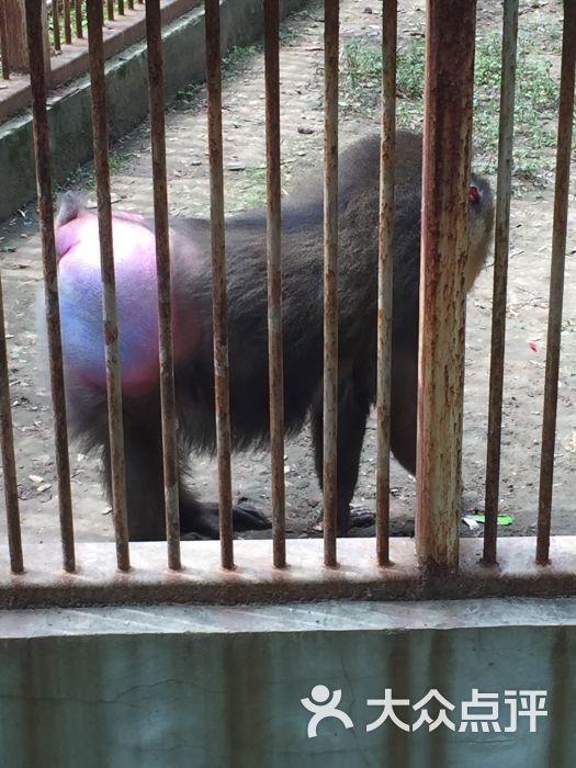 武汉动物园图片 - 第3张