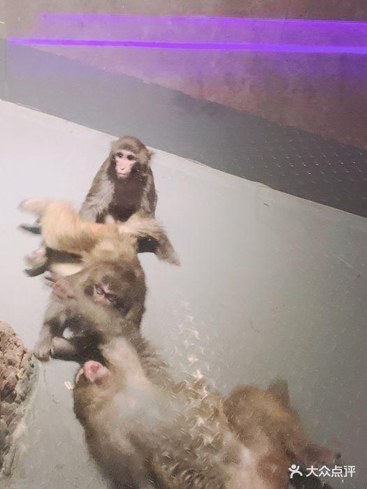 天津zoonly动物主题公园图片 - 第49张