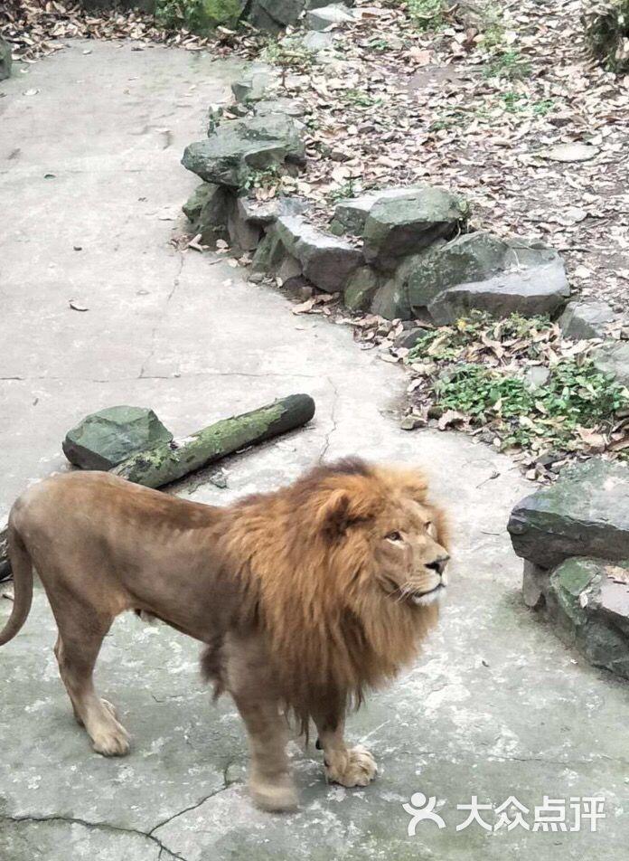 杭州动物园图片 - 第116张