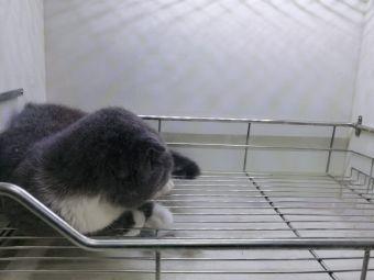 猫臣宠物医院