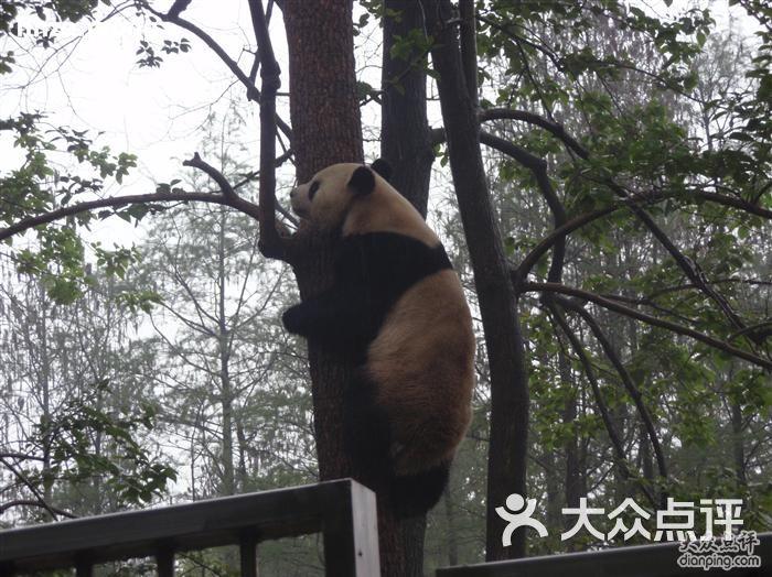 武汉动物园的点评