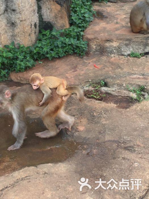 海南热带野生动植物园(动物园)-图片-海口景点-大众