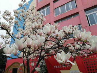 四川师范大学实验外国语学校(西南门店)