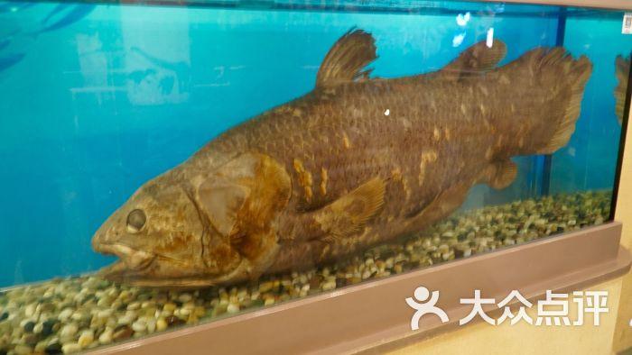 中国古动物馆图片 - 第8张