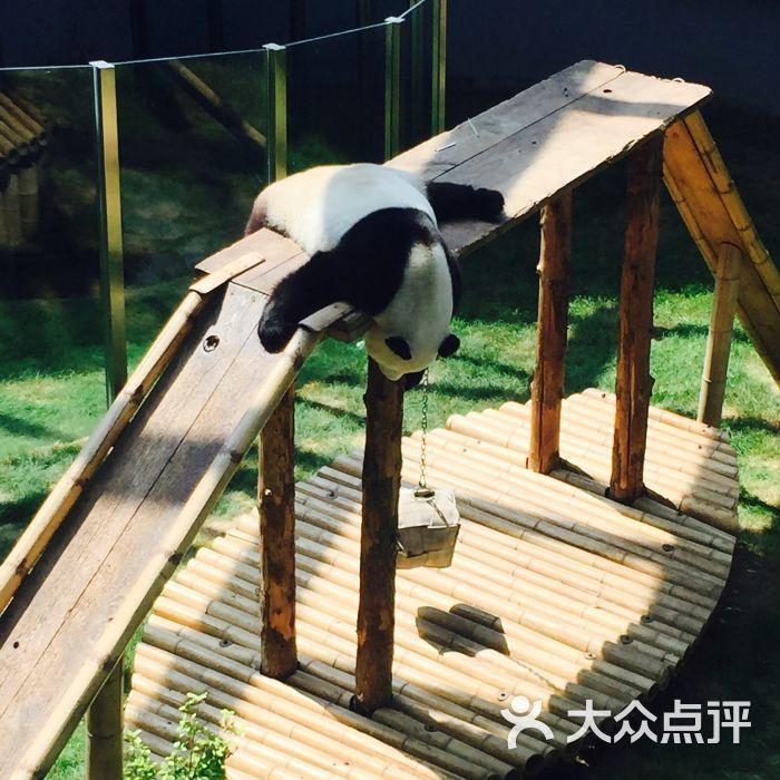 大连森林动物园的点评
