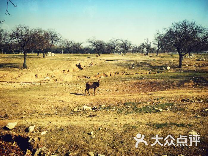 西安秦岭野生动物园图片 - 第5张