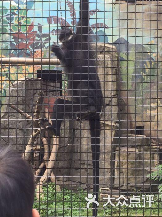 武汉动物园图片 - 第7张
