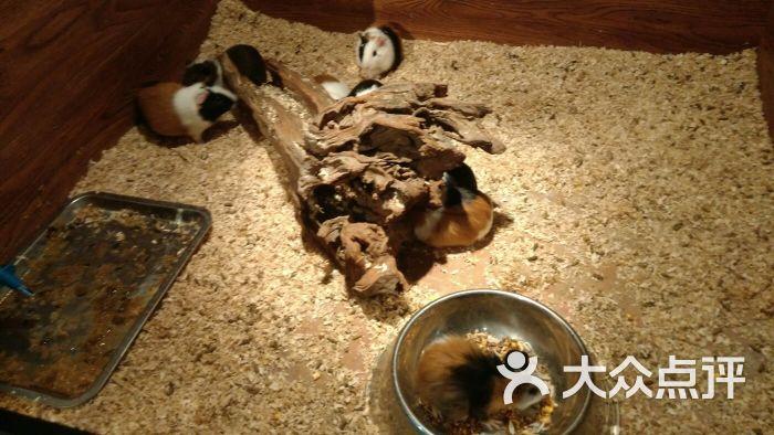 天津zoonly动物主题公园图片 - 第9张